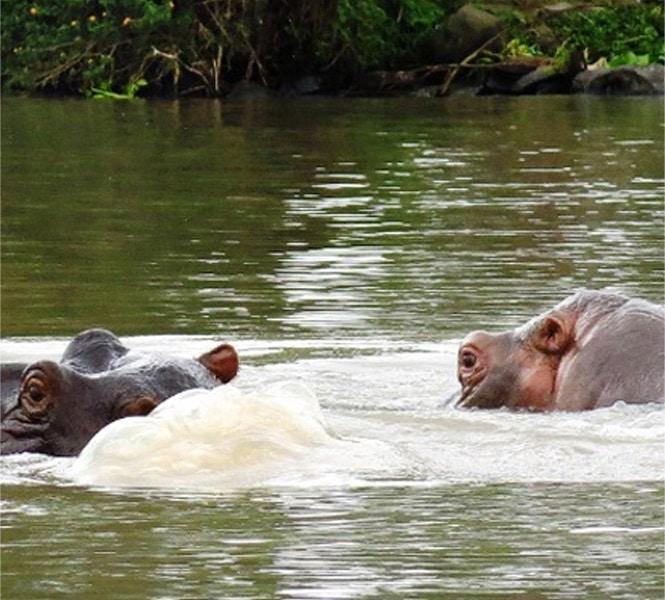 Hippo Point